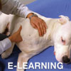 Canine Massage E-Learning Course