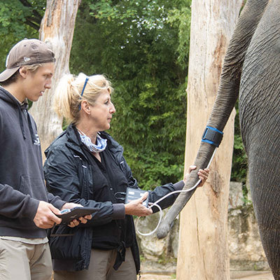 HDO Measurement Elephant at Wilhelma
