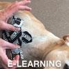 RockTape Canine Online module