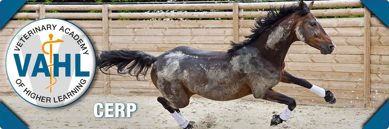 vahl-equine-starter