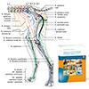 Anatomy Course Plus Book